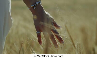 Close up woman hand in wheat field slow motion 240fps graded color