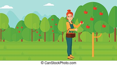 Farmer collecting apples. - A woman holding a basket and...