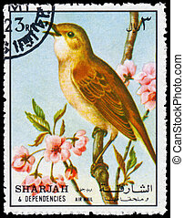 Stamp printed in Sharjah shows common nightingale -...