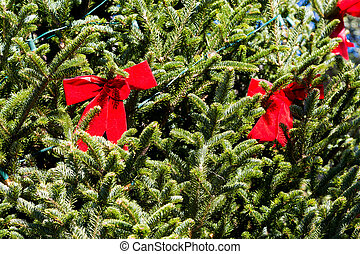 Two Red Bows in Christmas Tree