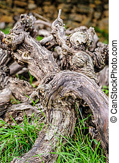 Old dead vines in gathered deadwood - Utrageously artistic...
