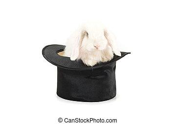 rabbit at black hat - Little rabbit at black hat isolated on...