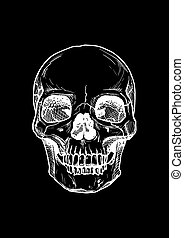 human skull with a lower jaw. - Vector black and white...
