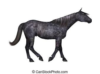 Black Horse on White