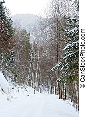 Altay forest - Winter forest on the slopes of Mount...