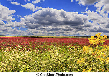 SPRINGTIME.Field of purple flowers. - SPRINGTIME. Alta...