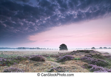 sunrise over hills with flowering heather