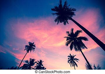 Palma, árboles, Siluetas, en, ocaso,