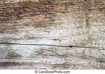 wood texture - a wood texture close up