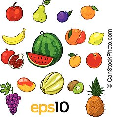 set of vector sketch fruits on a white