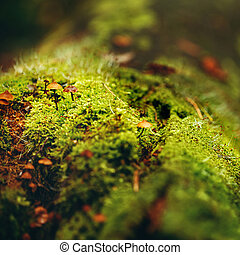 Moss Close Up View with Little Mushrooms - Nature Background...