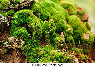 Nature Background Moss Close Up View - Nature Background...