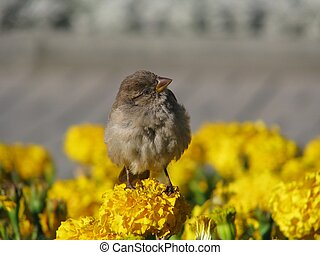 Self-confident sparrow on flower in the middle of flowerbed