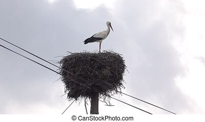Stork Sitting in Nest