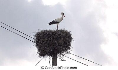 Stork Sitting in Nest