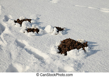 A molehill in a cold winter with snow