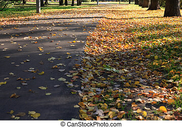 road in autumn, september, daily time, park