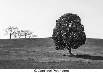 Black and white of Single tree,Tree in Olympic park.