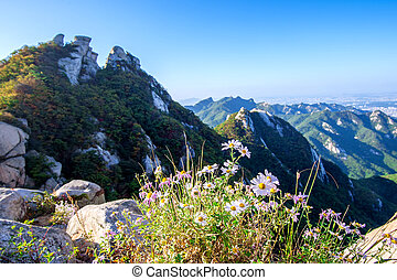 Flowers on Bukhansan mountains, South Korea