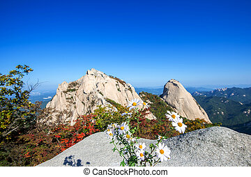 Flowers on Bukhansan mountains, South Korea.