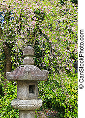 Japanese stone lantern under Sakura cherry blossom trees...