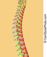 Backbone., 3D, render, Ilustración,