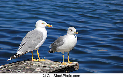 Seagulls standing on the pier
