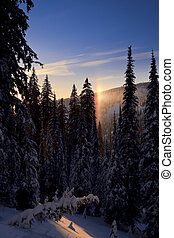 Sunny Mountain Landscape With Tall Evergreens - View of a...