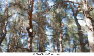 Sunshine in pine needles. beautiful natural background. View...