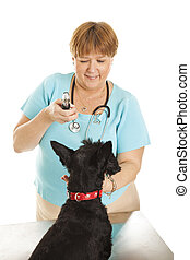 Female Veterinarian - Female veterinarian looking in a...