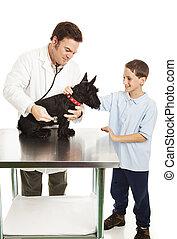 Dog and Boy at Vet