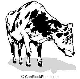 Spotted Milk Cow - Black and White Illustration, Vector
