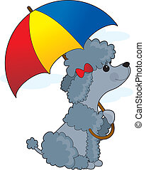 Poodle in Rain - A little grey poodle is sitting with an...