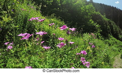 Alpine meadow with large flowers