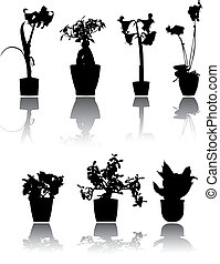 plants - 7 beautiful house plants silhouettes, reflected
