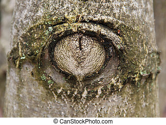 gnarled tree trunk in the form of eye
