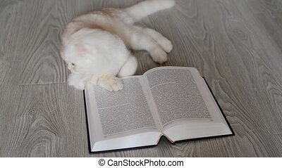 Beige Scottish Fold kitten near open book - Beige Scottish...