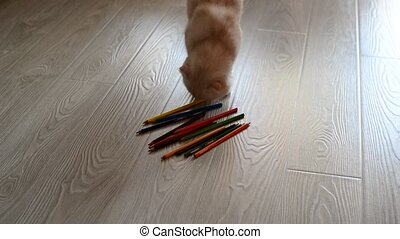 Red kitten playing with colored pencils