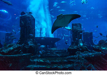 Large aquarium in Hotel Atlantis in Dubai - DUBAI, UAE -...