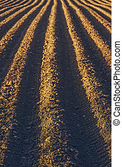 Rows pattern in a plowed field - Furrows rows in a plowed...