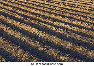Plowed potatoe field