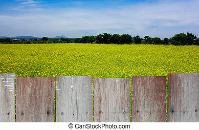 The wood fence with yellow garden and sky in background