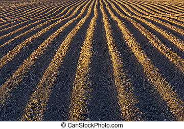 Rows pattern in a plowed field - Furrows row pattern in a...