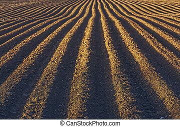 Rows pattern in a plowed field - Furrows row pattern in a...