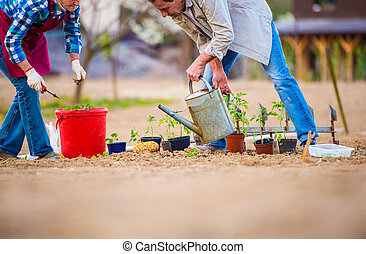 Senior woman and man in garden planting and watering