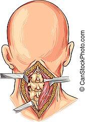 white background vector illustration of a Cervical Spine