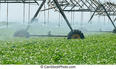 Soy bean field watering - Soybean field with Irrigation...