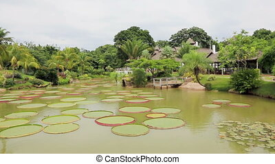 Tropical garden with Victoria Regia - Beautiful tropical...