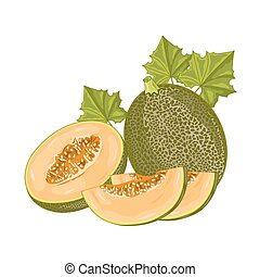 Melon fruit on white background. - Isolated melon on white...