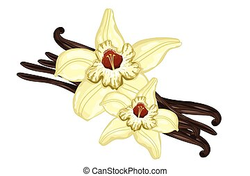 Vanilla sticks with a flower on white background